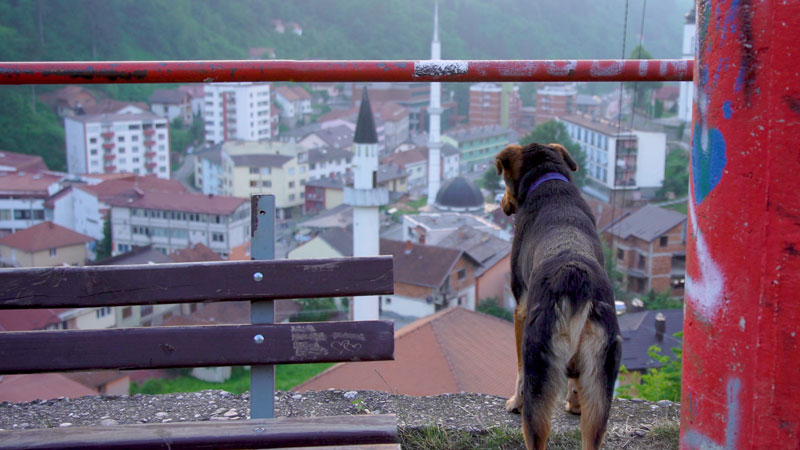 Town Ruled by Animals – De Ontmoeting